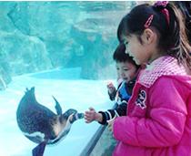 動物園ペンギン